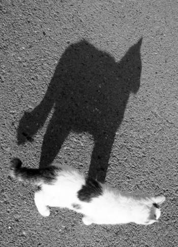 Монолог тіні