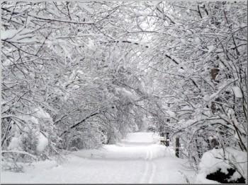 Лебедино-сніжні заметілі