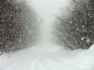 Замело білим снігом...