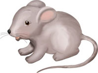 Сіра мишка