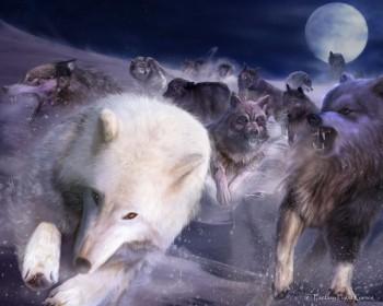 Людина людині – вовк…