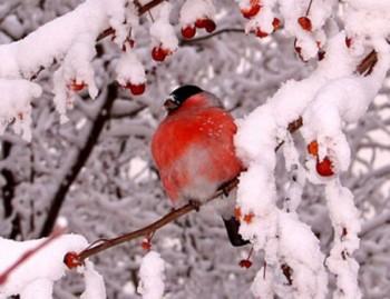 Світанкує початок зими…