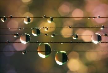 Мелодія дощу
