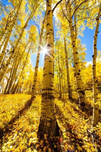 Моя осінь