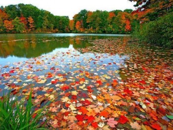 Лісове озерце