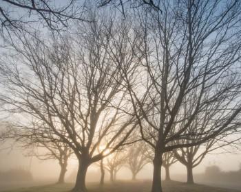 Березневі дерева – оголені струни душі