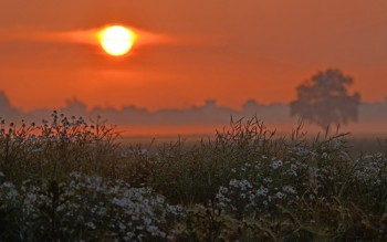 На світанні трави в росах...