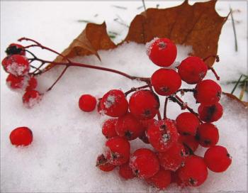 Зима веде в танок