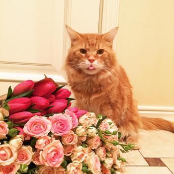 Котик Руденький