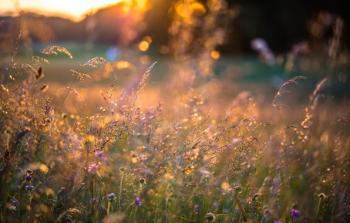 Сходить вечір у трави духмяні...