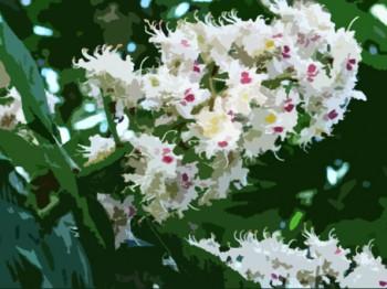 Цвітуть каштани