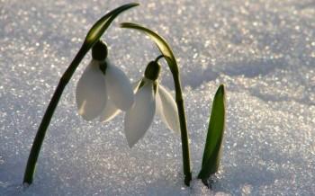 Весна з березнем цілувалася