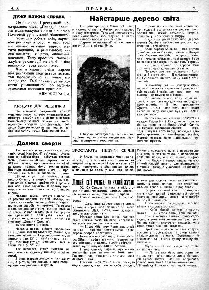 Січень 1930: Долина смерті. Найстаріше дерево світу.