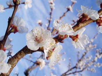 Вибухова весна