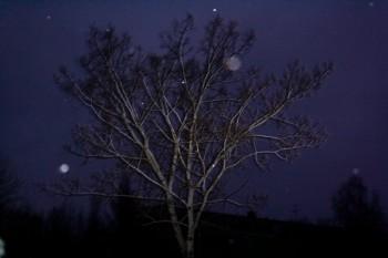 Спрага синьої ночі