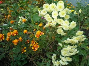 Мій квітник
