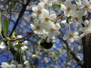 Пісні медової весни