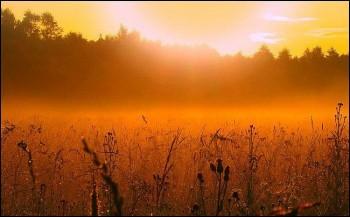 На світання золотому тлі