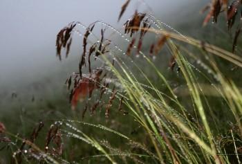 Перехрестя дощів