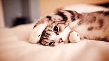 Кішка осені