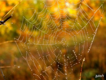 Казкове павутиння