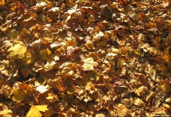 Прислухайтесь, як листя шелестить...