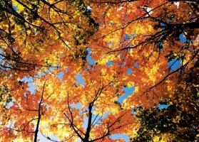 Глибока осінь у садках