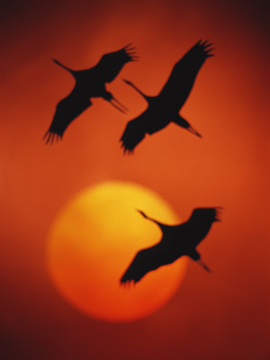 Перелітний птах