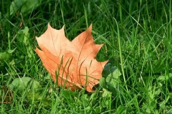 Осінній лист тихо палав та осінь полонила