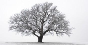 Дерева засинають...