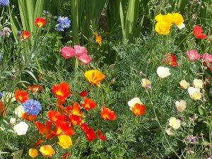 В саду мого дитинства...