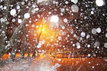 Суму спраглий сніг