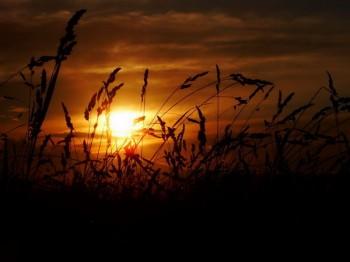 Сонце у травах