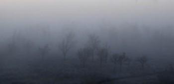 Туман сивий