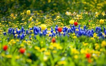 Весна сміється