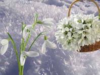Перші проліски весняні