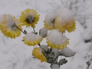 Березневий сніг