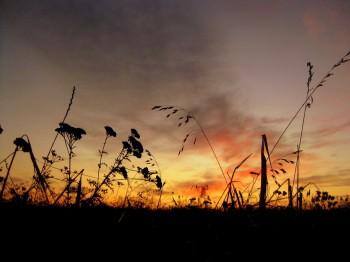 Передбачення світанку