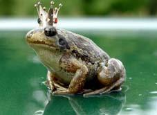 Гарна жаба
