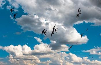 Марево хмарин на видноколі...