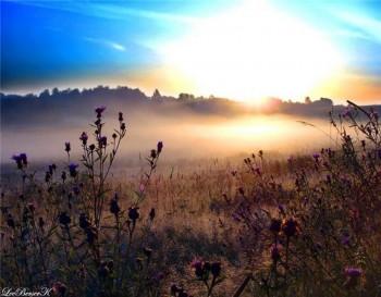 Замріяло в тумані тло небесне