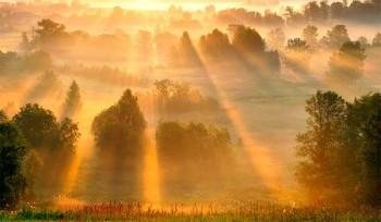 Сонячне злато