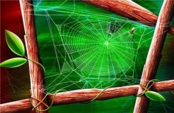 павучок у дні літа...