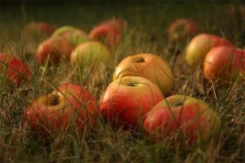 Яблуко в руці