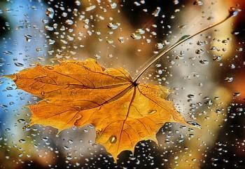 Під струнами дощу