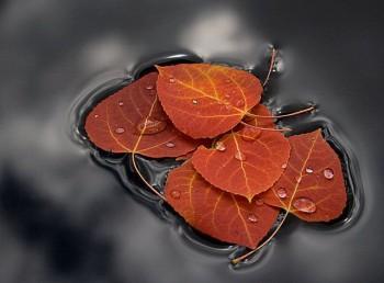Доля листя