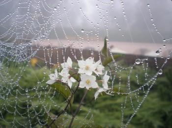 Павутинка