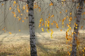 Жовтневе туманне безмежжя