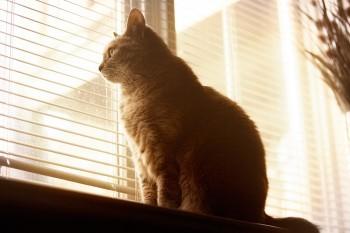 Кіт на підвіконні
