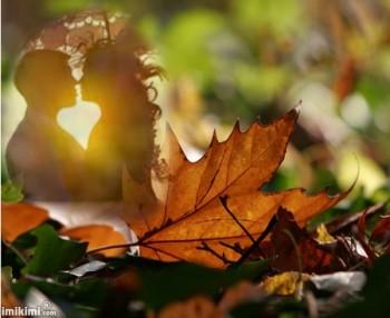 Крізь осені призму...